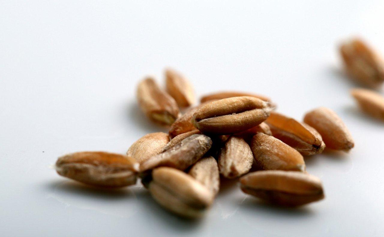 Farro glutine e celichia