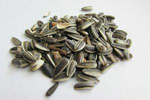 Seme girasole valore nutrizionale